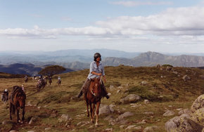 High Country Horses - Accommodation Australia