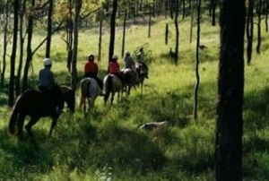 Hunter Valley Horse Riding and Adventures - Accommodation Australia